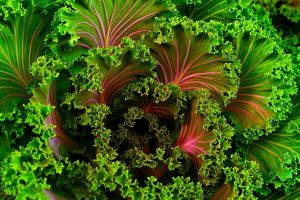 kale has been shown to have a bunch of health benefits